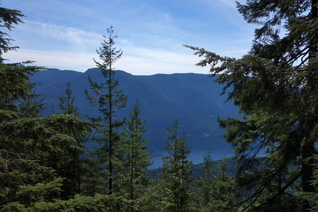 Treed View of Alouette Lake on Evans Peak Trail