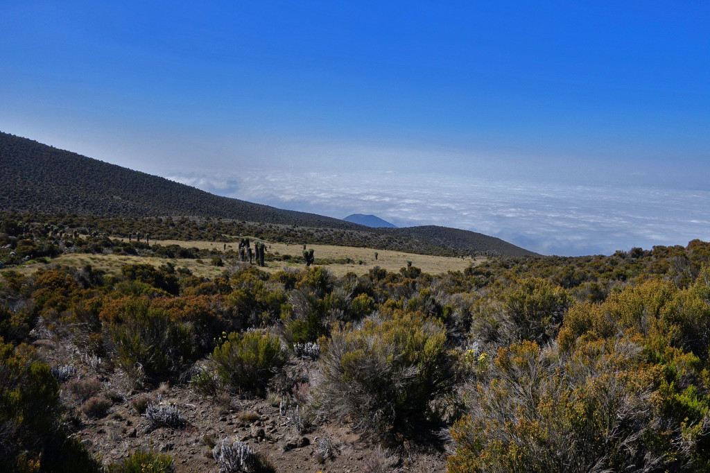 Hike to Zebra Rock marangu route mt kilimanjaro