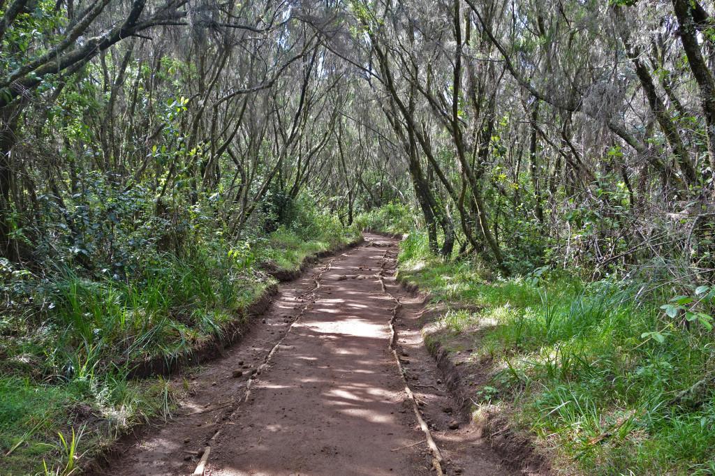 Marangu Route mt kilimanjaro Uhuru Peak