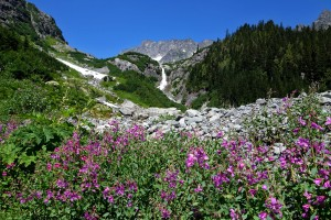 Wild flowers and water fall