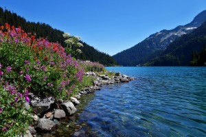 Wild flowers and lake