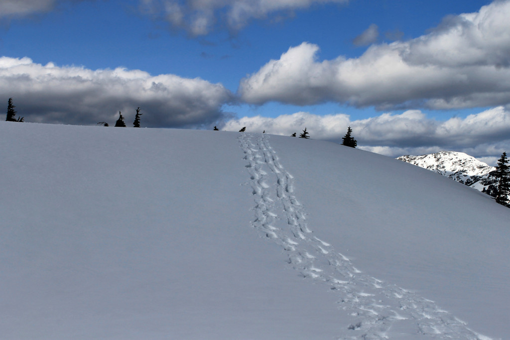 Our Snowshoe Tracks Coming Down Iago Peak