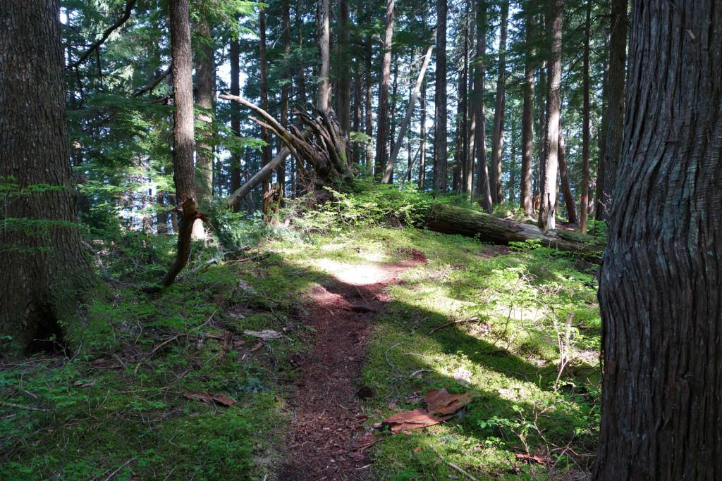 Evans Peak Trail First Plateau