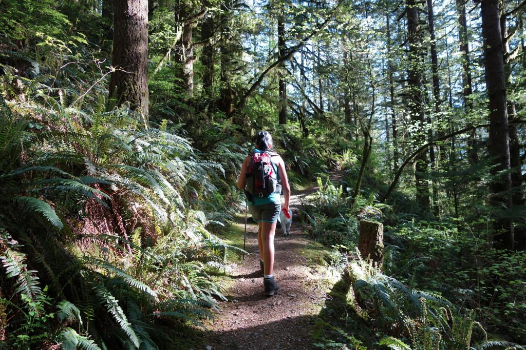 Walking Skeena Along the Evans Peak Trail