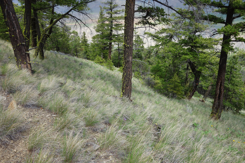 Grassy Slopes Along Fire lookout trail west pavilion
