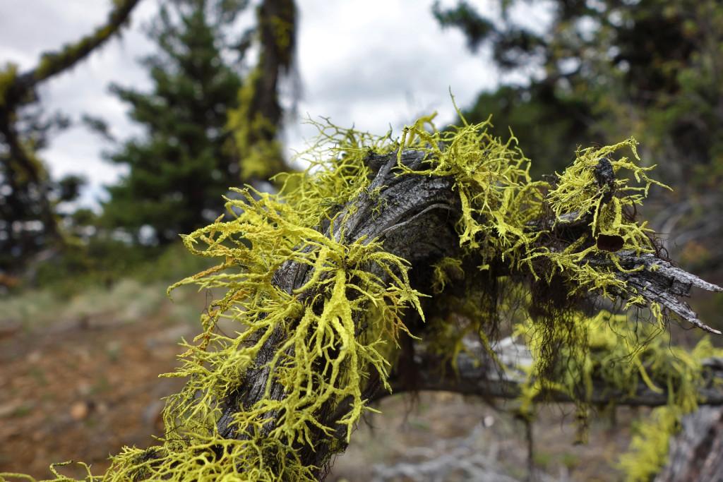 Flora Along the Firelookout Trail west pavilion