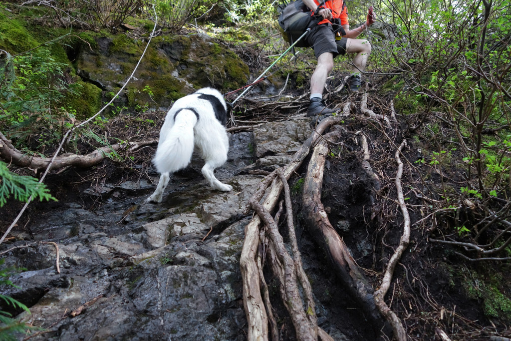Skeena Scrambling up the First Steep Section of the Evans Peak Trail