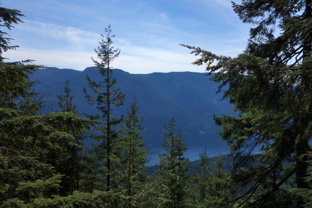 Treed View of Alouette Lake on Evans Peak Trail