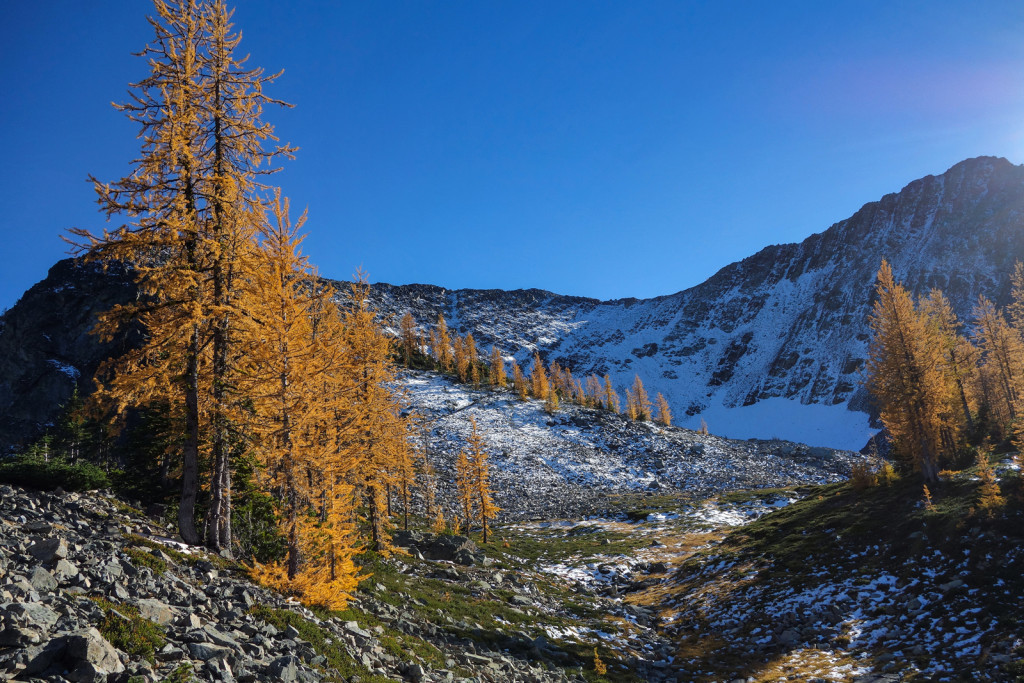 A Look Back at the Ridge Frosty Mountain Manning Park Golden Larches