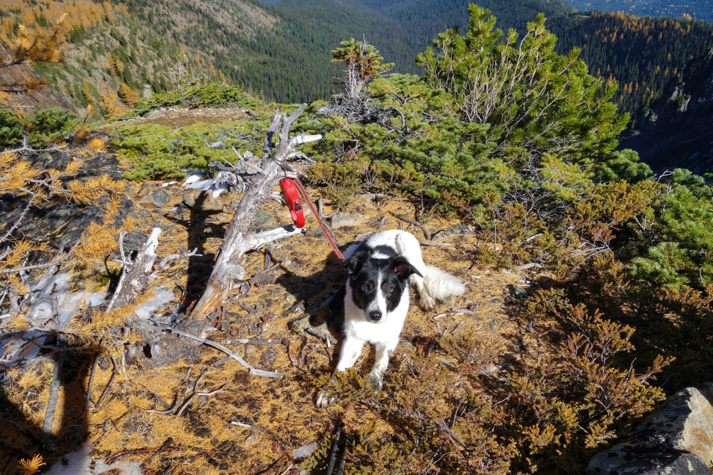 Skeena Resting Before the Scree Slope frosty mountain golden larches manning park