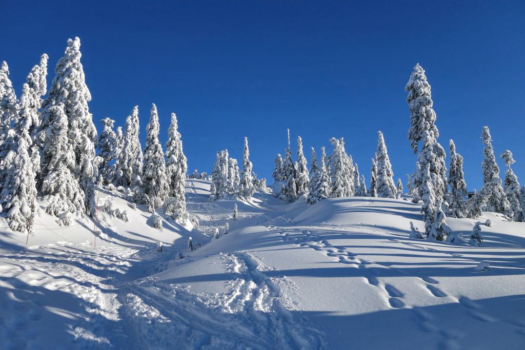 Mount Seymour, Tim Jones Peak, Adventures of a T1D, type 1 diabetes, Ashika Parsad