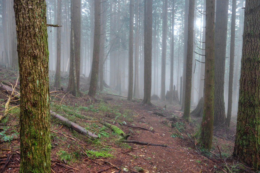 Woodland Walk Trail, Burke Mountain