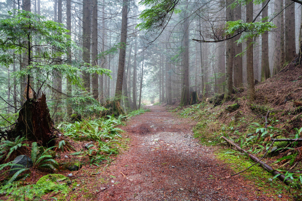 Woodland Walk Trail, Burke Mountain
