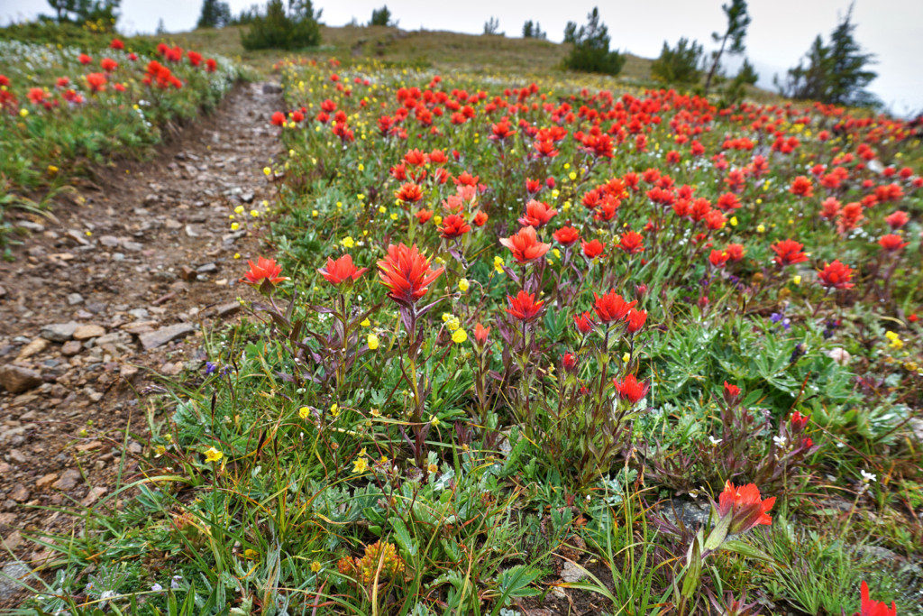 Wildflowers Near the First Brother