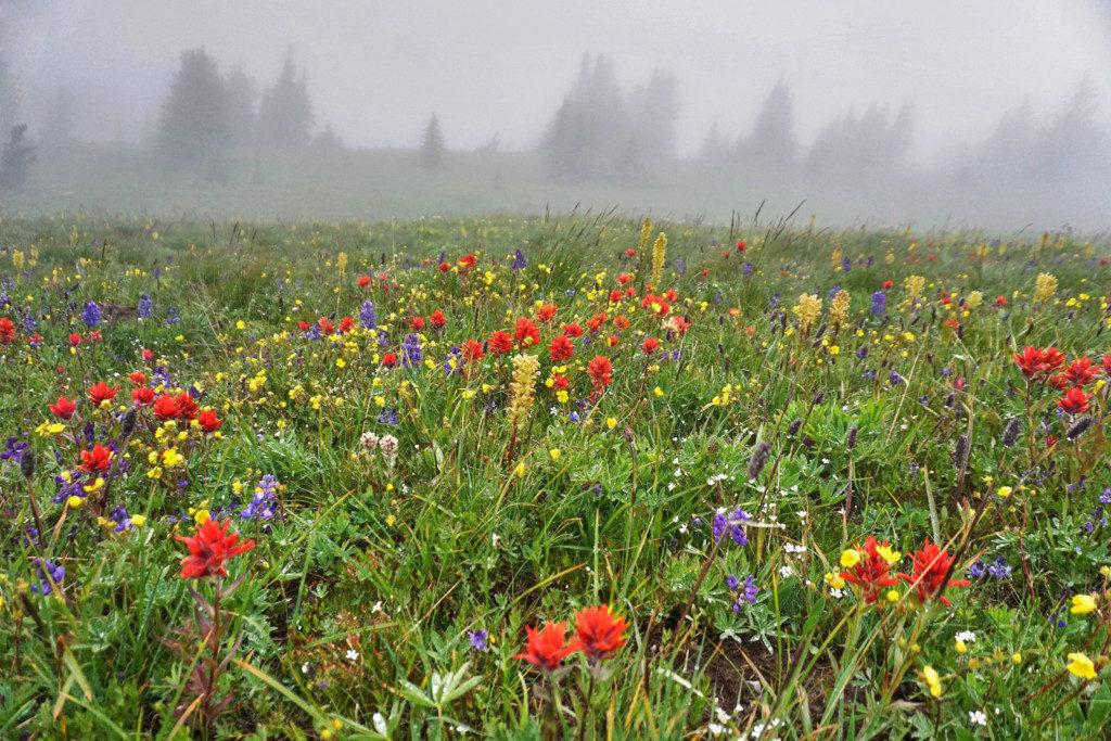 Wild Flowers Past Second Brother Peak
