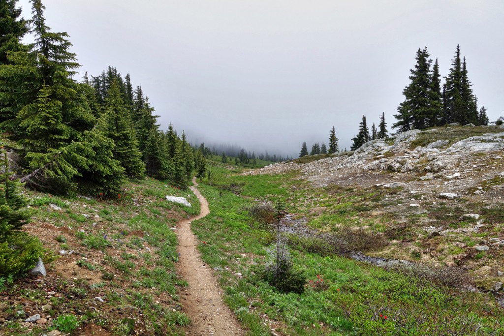 View Along the Heather Trail