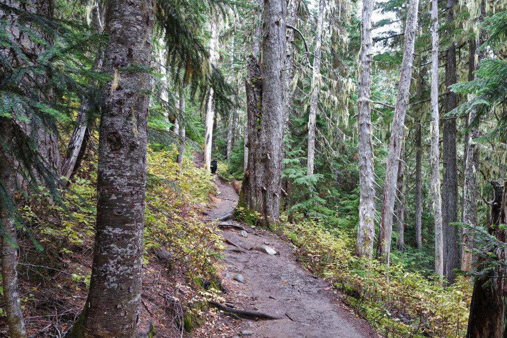 Bear, Garibaldi Lake Trail